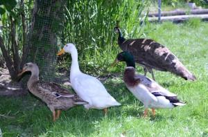 OV_Vogelpark_5098