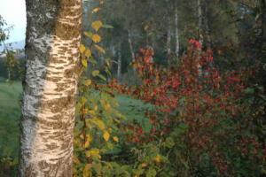 Birka_Naturschutz_064